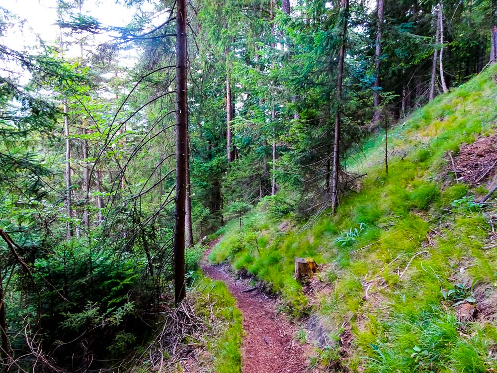 Der Zustiegsweg durch den Wald.