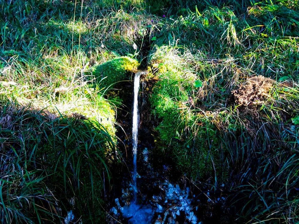 Die einzigen Quellen sind im Waldstück unter der Schafalm