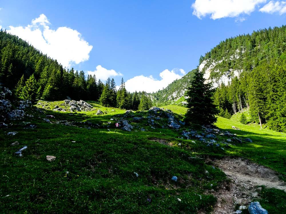 Aus dem Waldstück der Wiese entlang