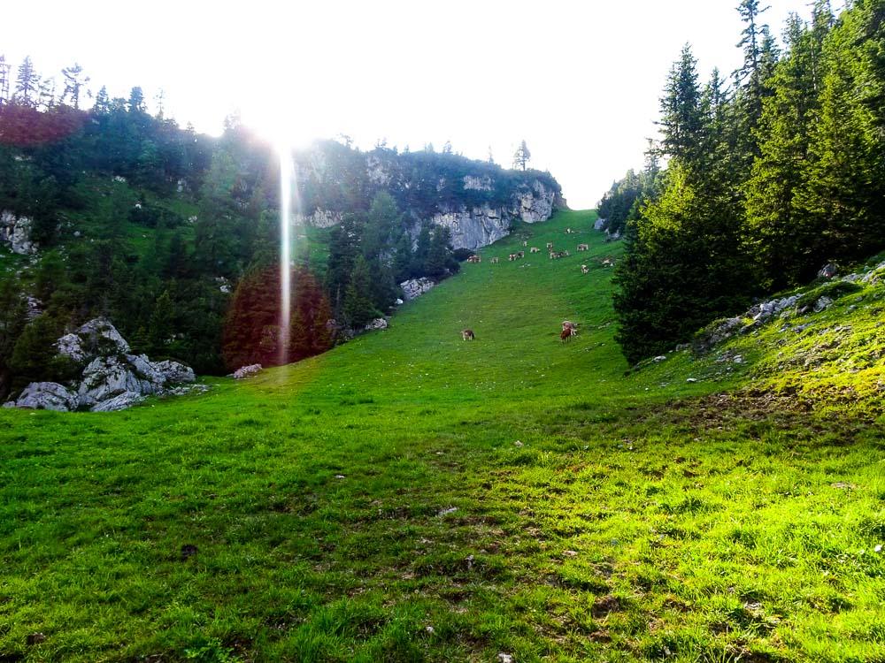 Der letzte Almwiesenabschnitt vor der Bergstation.