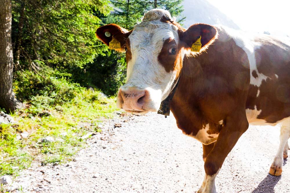 Wanderung im schönen Karwendel von Innsbruck bis Hallangerhaus (Tirol)