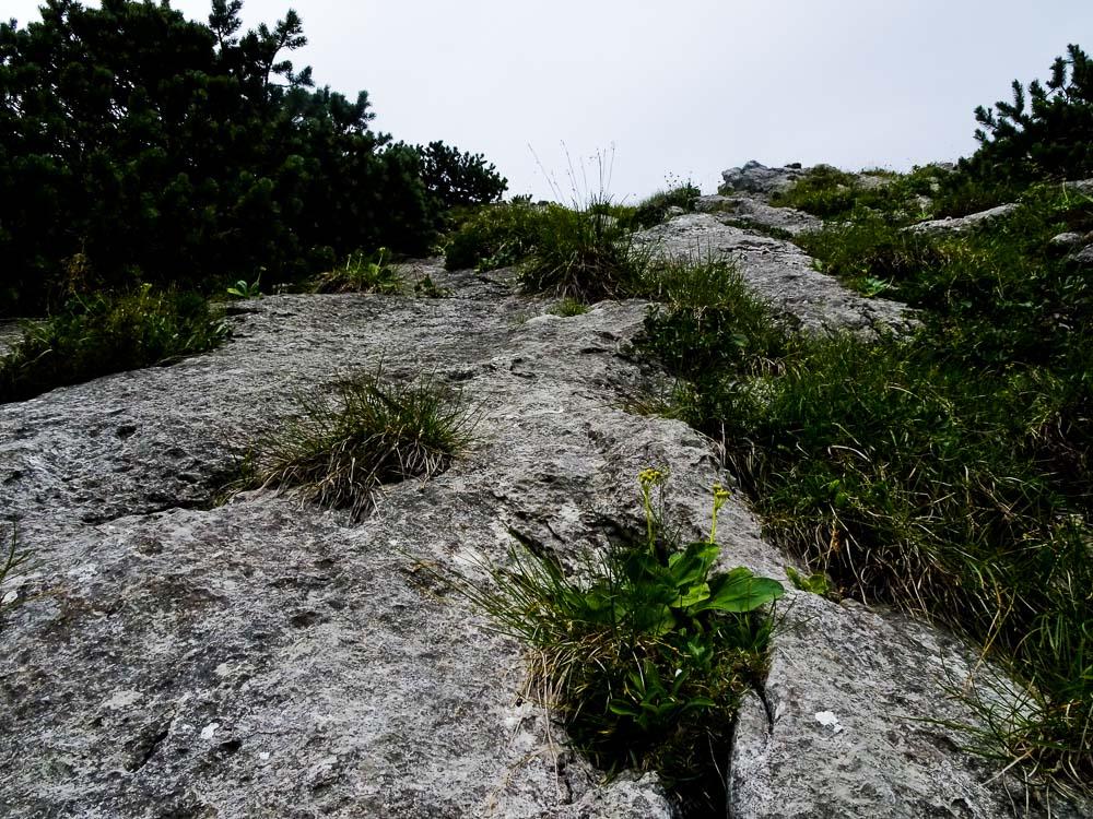 Schöner Fels, aber teilweise brüchig und viel Gemüse.