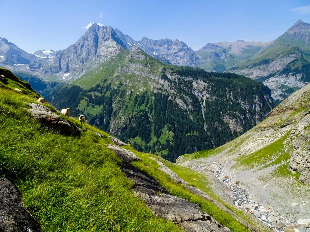 Der Aufstiegsweg zur Rottalhütte führt über einen Bach und Schafweiden.