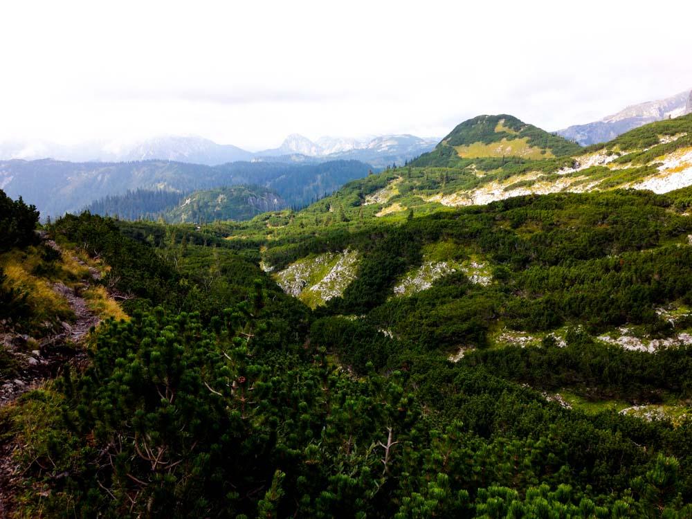 Am Abstieg Richtung Häuslalm geht es durch die großen Latschenfelder.